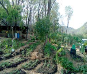 Climate smart Permaculture design field in EcoHub Gambella, Ethiopia