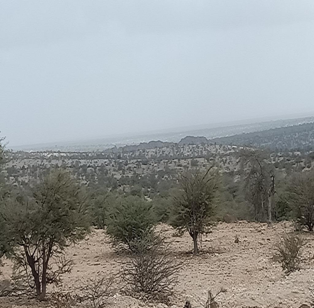 Geed Deeble Botanic Garden, Somaliland